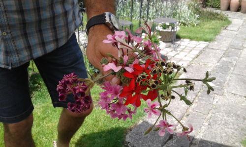 Blumenhaus Zell 1