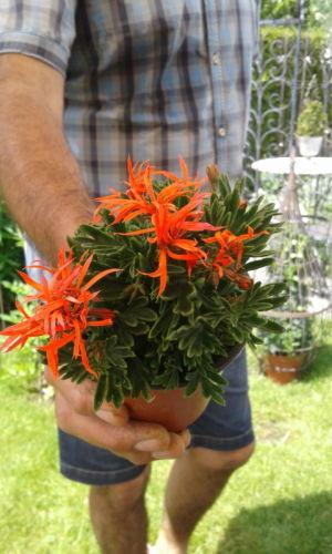 Blumenhaus Zell 3