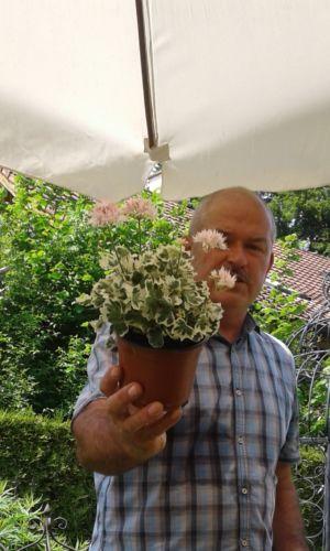 Blumenhaus Zell 4